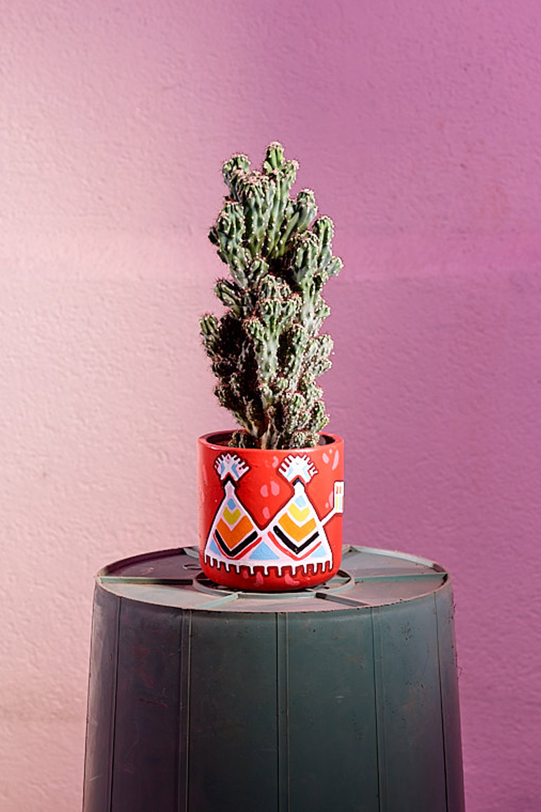 Kaktus-Inka-Rot.web